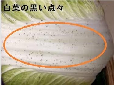 白菜 黒ずみ