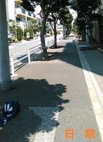 hikage01.jpg