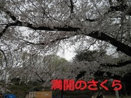 ohanami2019-2.jpg